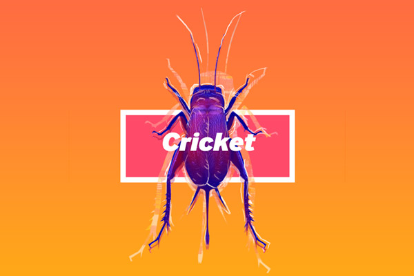Cricket and Mud Brick thumbnail